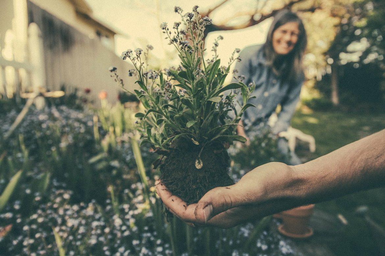 Décor fleuri : 5 façons d'utiliser les plantes dans le design